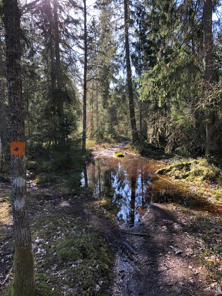En stor vattenpöl mitt på stigen av Östgötaleden