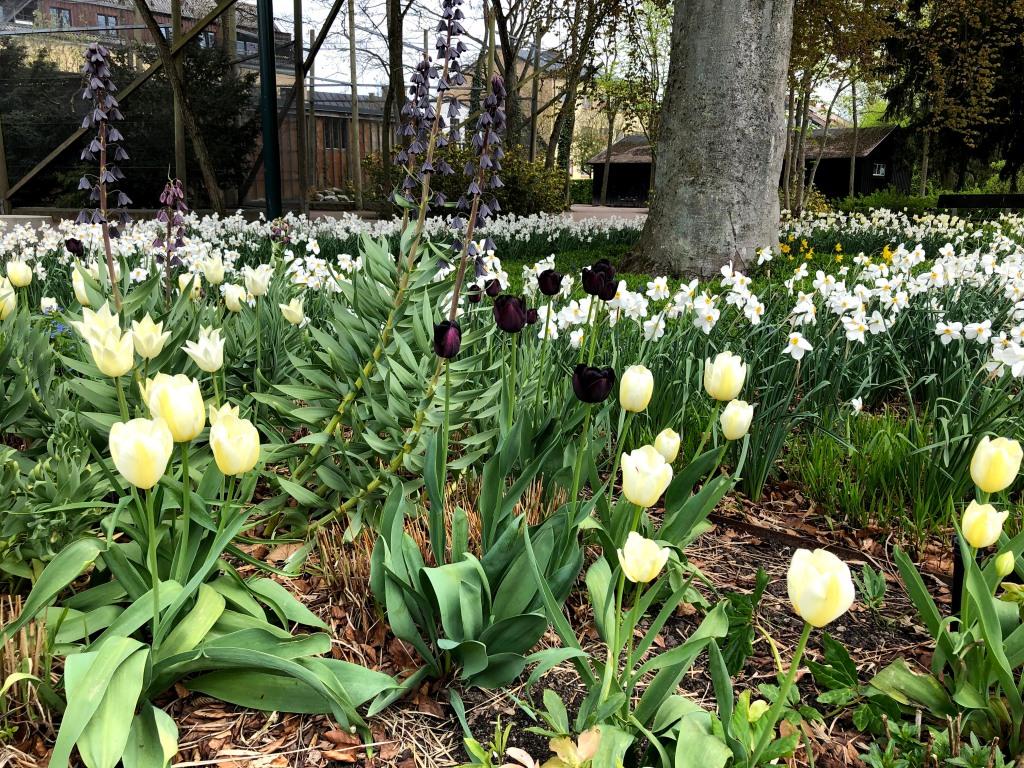 Tulpaner och andra växter i Solens och skuggans trädgård.